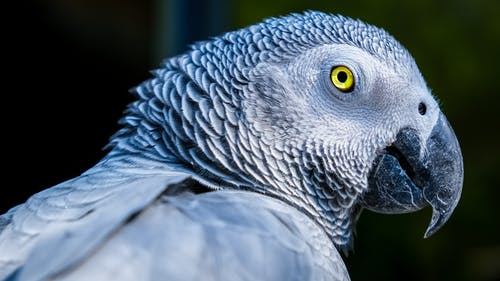 Ảnh lưu trữ miễn phí về chim, chụp ảnh động vật, chụp ảnh thiên nhiên, con vật