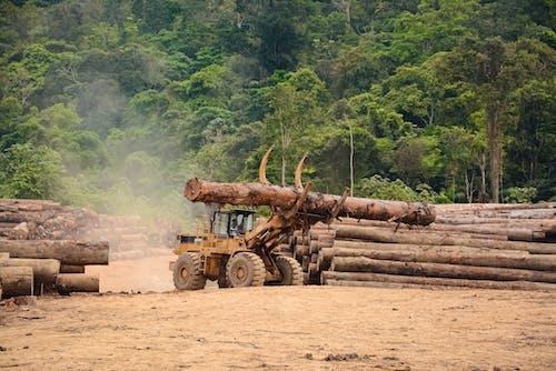 Gratis arkivbilde med avskoging, regnskog, sør-amerika
