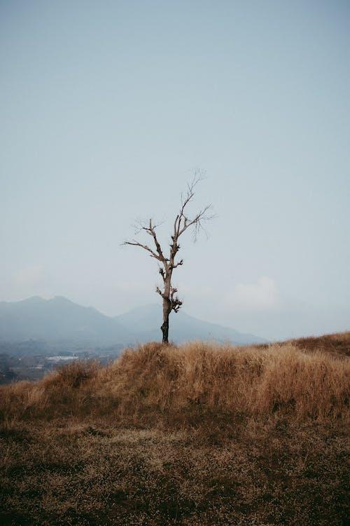 Ilmainen kuvapankkikuva tunnisteilla nurmikenttä, paljas puu, puu, ruoho