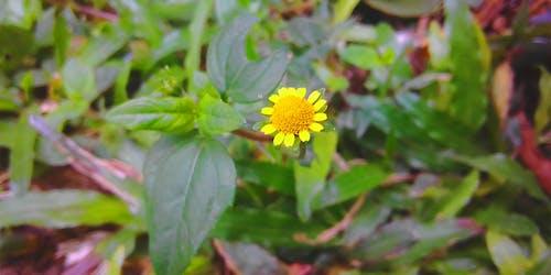 Gratis lagerfoto af gul blomst