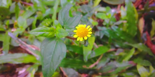 Gratis stockfoto met gele bloem