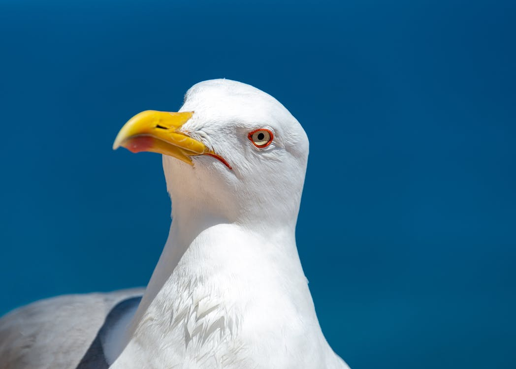 chân dung con vật, chân dung động vật, chim