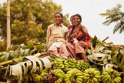 Gratis lagerfoto af afgrøder, aktie, banan, blade