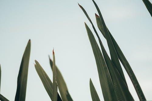 Gratis lagerfoto af blade, flora, græs