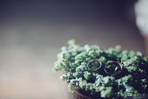Бесплатное стоковое фото с свадьбы