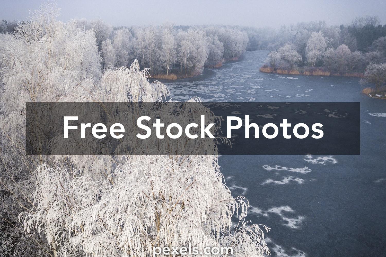 1000+ Beautiful White Trees Photos Pexels · Free Stock Photos