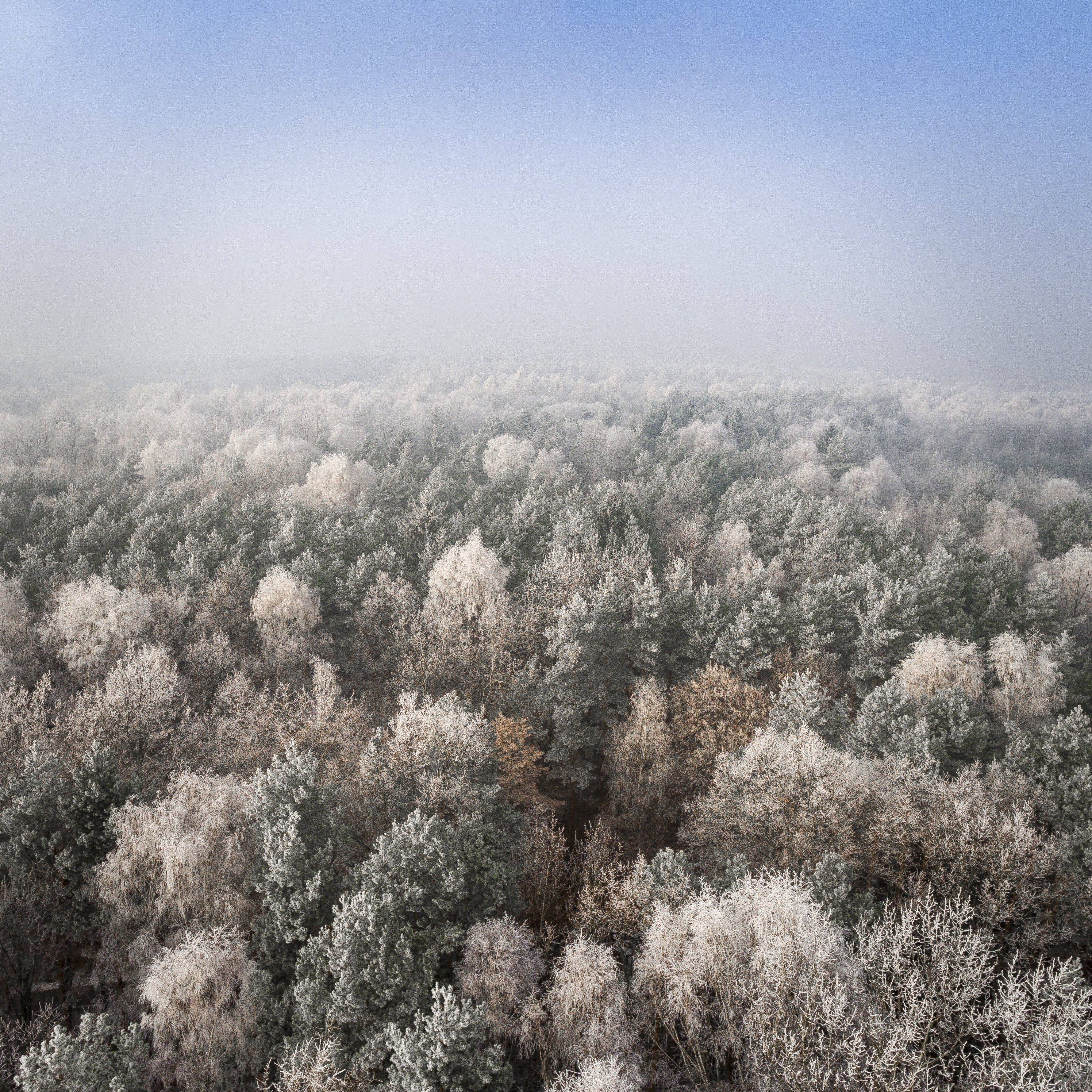 Aerial Photo of Forest Under Blue Sky