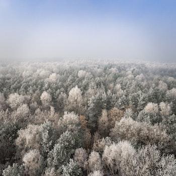 Desktop background of cold, snow, wood, landscape