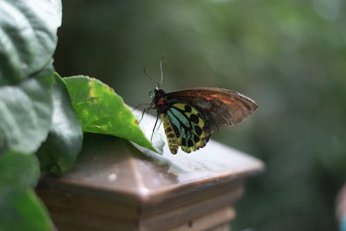 Immagine gratuita di farfalla, farfalle