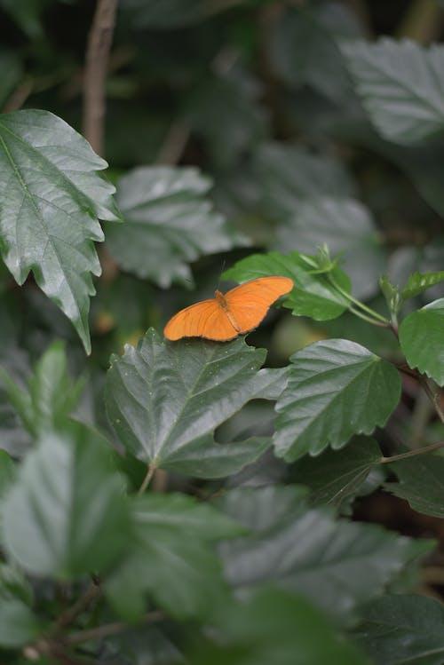蝴蝶 的 免費圖庫相片