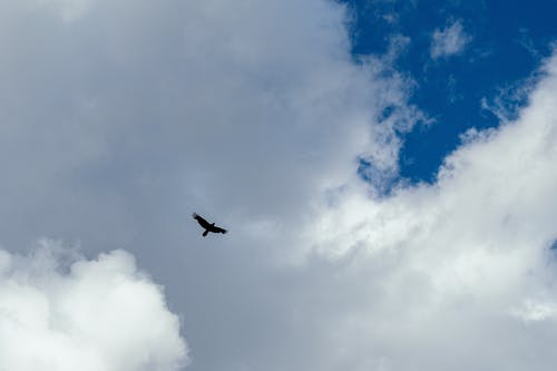 Photo of Bird Flying in the Sky
