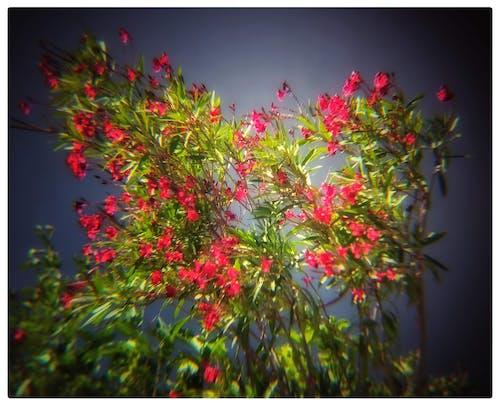 Безкоштовне стокове фото на тему «#beauty # flowers»