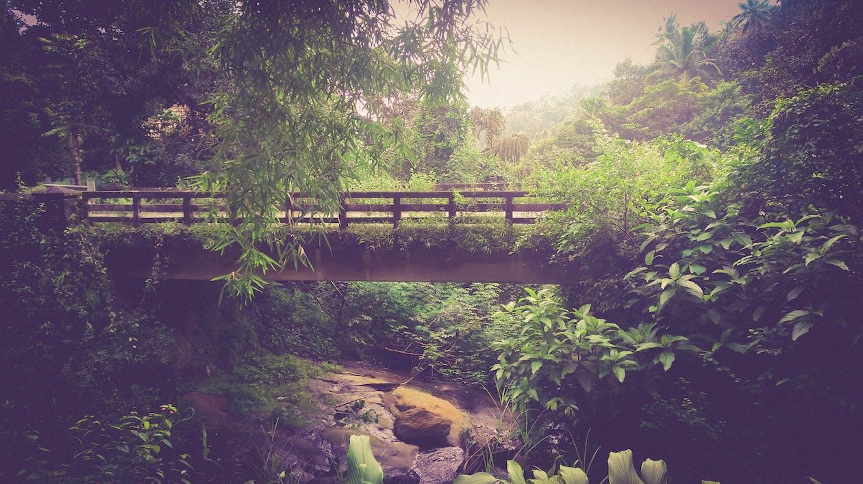 dažďový prales, džungľa, hmla