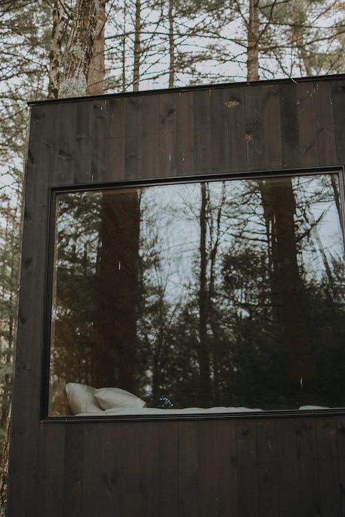 açık hava, ağaç, ağaçlar, ahşap içeren Ücretsiz stok fotoğraf