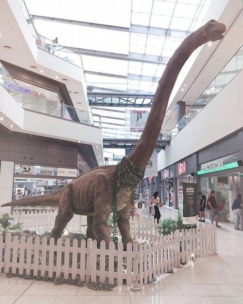 Foto d'estoc gratuïta de centre comercial, dino, dinosaure, dinosaures