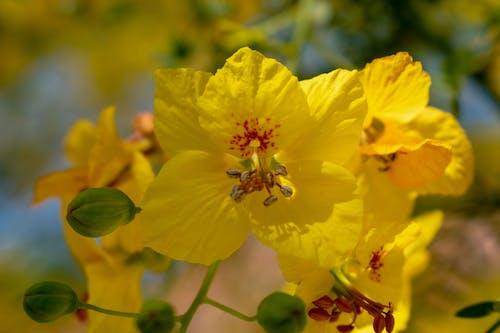 天性, 美丽的花, 美麗的花朵, 黃色 的 免费素材照片