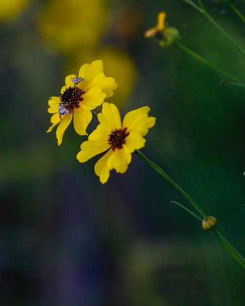 böcek fotoğrafçılığı, bokeh, çiçek içeren Ücretsiz stok fotoğraf