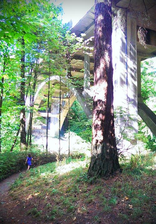 Free stock photo of bridge, child, forest