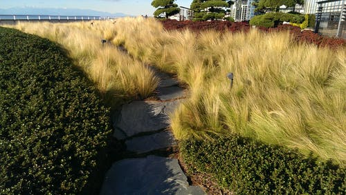 Free stock photo of green roof, landscape architecture, seattle