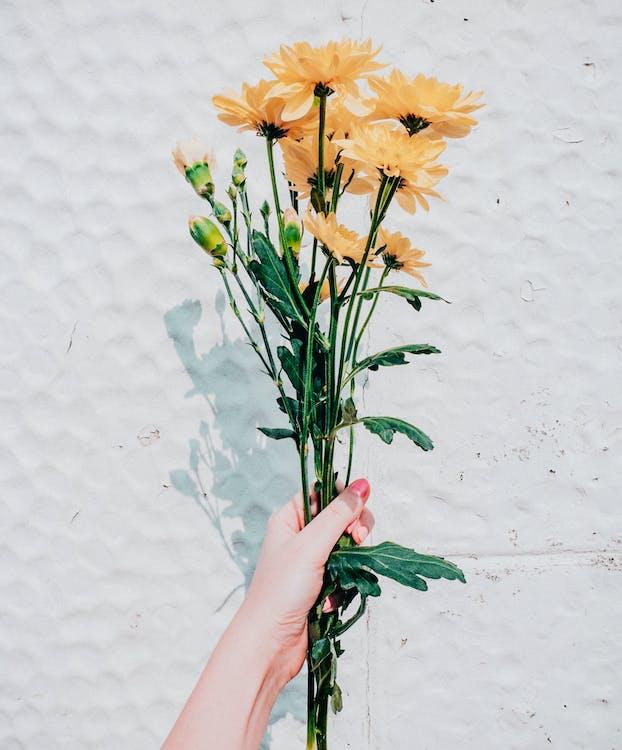 꽃, 노란 꽃, 다발