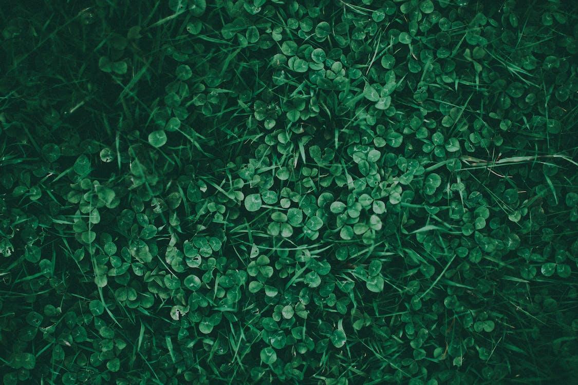 alam, Daun-daun, dedaunan