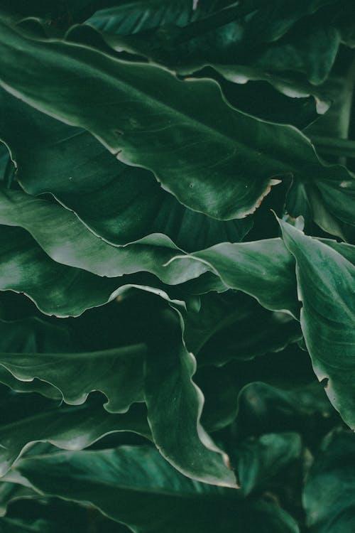 зелений, зелені рослини, колір