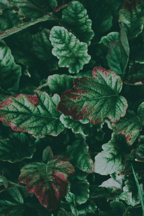 Ingyenes stockfotó levelek, lomb, növényvilág, szín témában