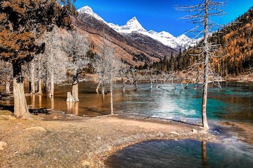 Kostnadsfri bild av berg, bergen, falla, flod