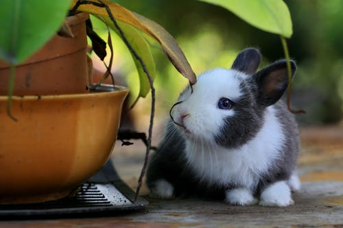 A Bunny Besides Potted A Plant