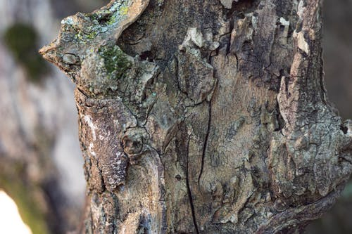 Imagine de stoc gratuită din apropiere b, buștean, conifere, fotografie cu natură