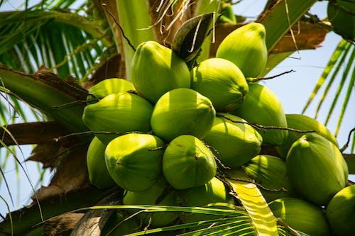 Darmowe zdjęcie z galerii z kokosy