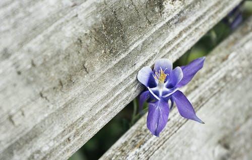 セレクティブフォーカス, フォーカス, フローラ, 咲くの無料の写真素材