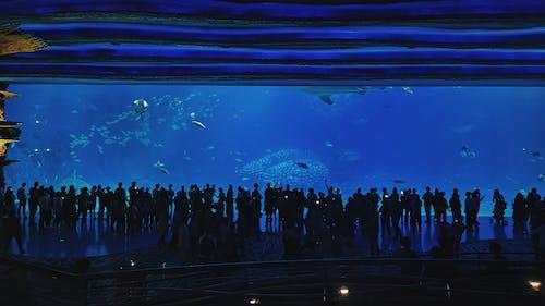 Free stock photo of aquarium, atmosphere, blue
