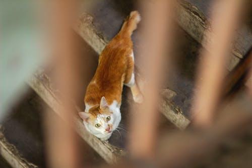 Photos gratuites de chat, tête de chat
