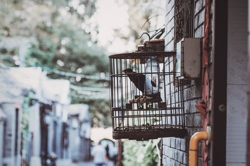 Δωρεάν στοκ φωτογραφιών με γκρο πλαν, μαύρο πουλί, οικία, πουλί