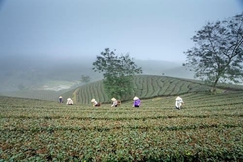 People Harvesting