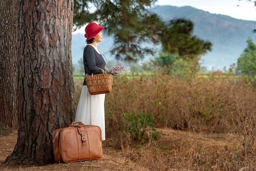 경치, 경치가 좋은, 나무, 단기 여행의 무료 스톡 사진