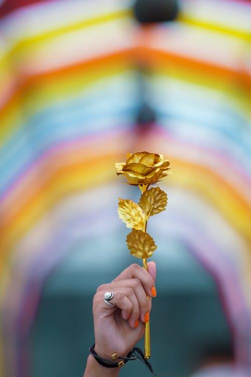 Foto profissional grátis de anel, argola, arte, arte contemporânea