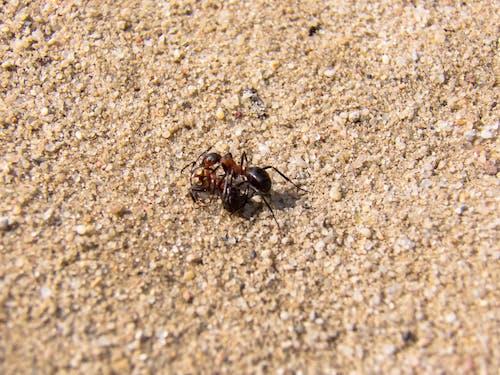 Free stock photo of ants, arthropod, close up