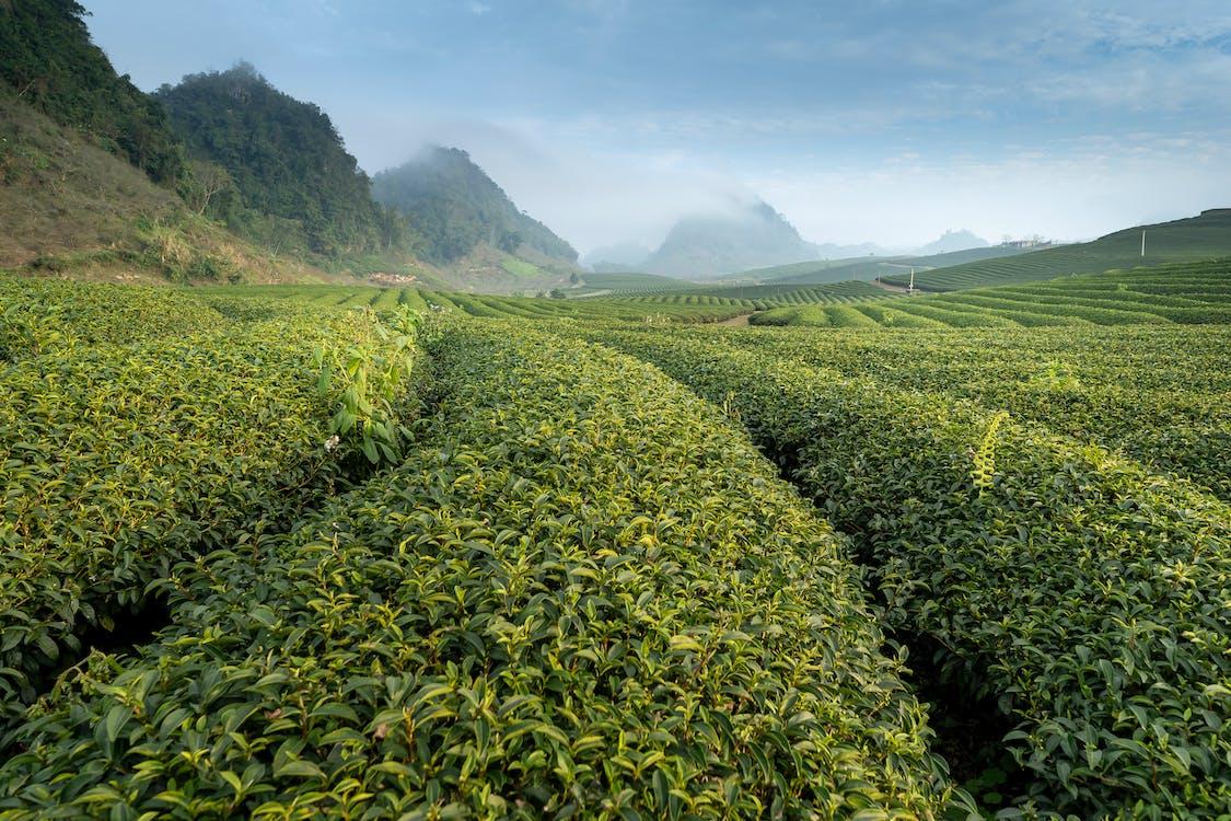 Gratis stockfoto met akkerland, berg, boerderij