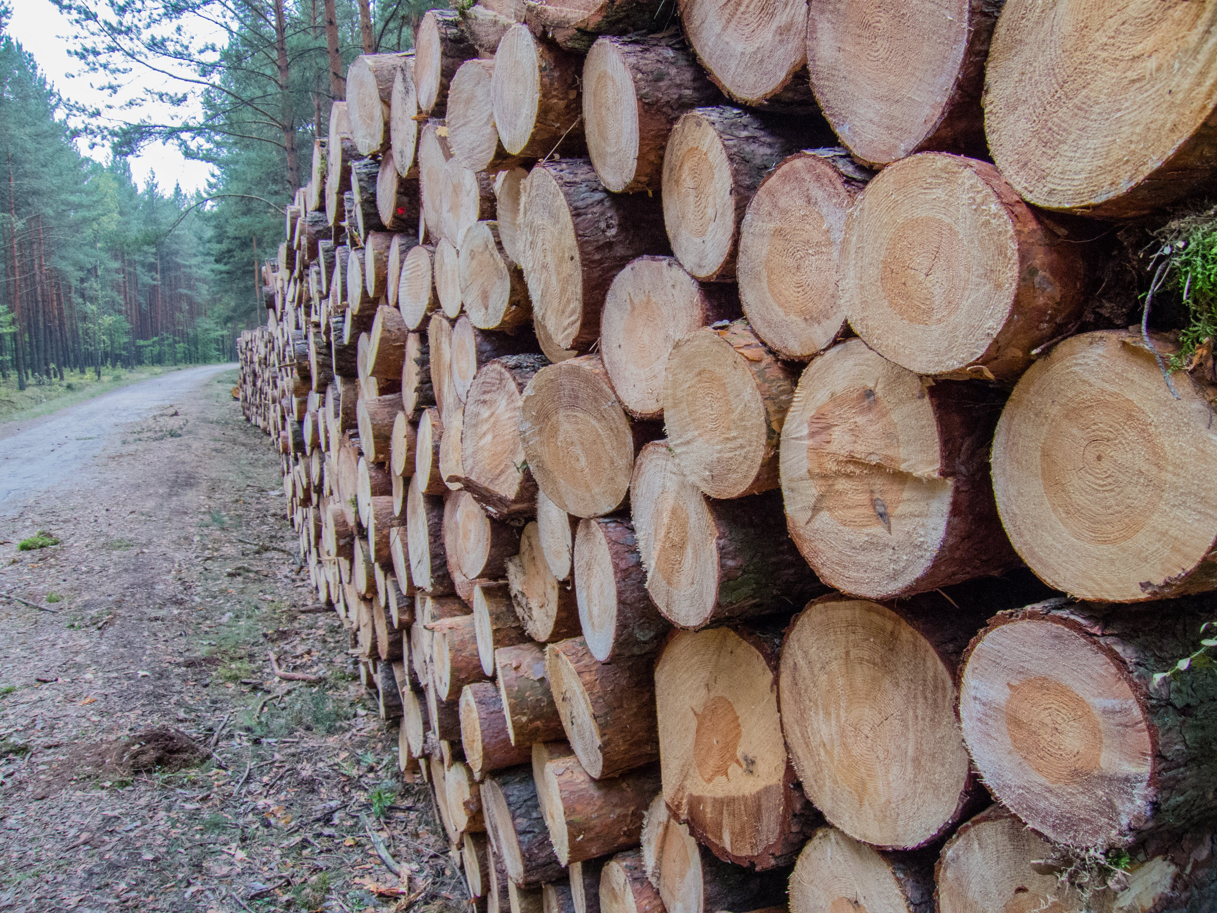 Free stock photo of wood, forest, pattern, firewood