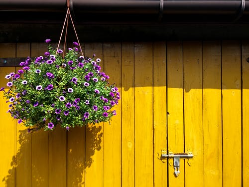 Free stock photo of beautiful flowers, colorfu, doors