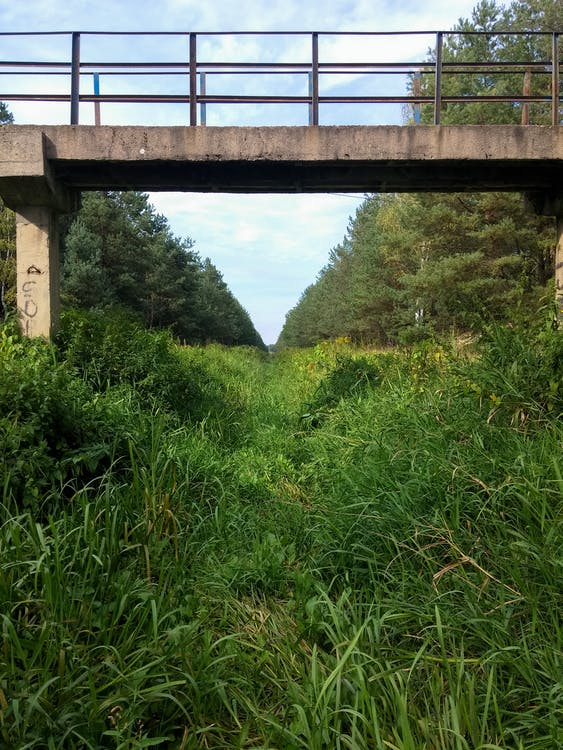 Free stock photo of bridge, ditch, forest