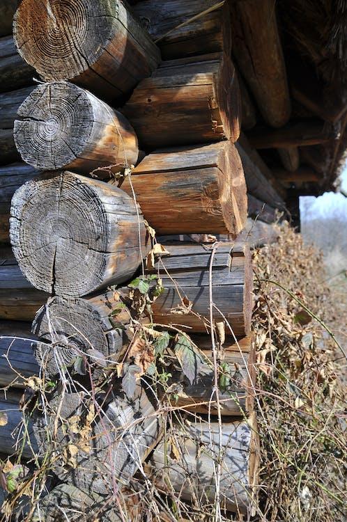 Ingyenes stockfotó fa, olddays house témában
