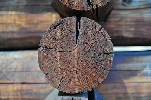 Ingyenes stockfotó fa, fénysugár, gerenda témában