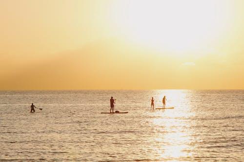 Free stock photo of morning, sea life, sport, sun light