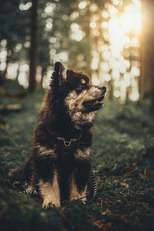 A Pet Dog In A Forest