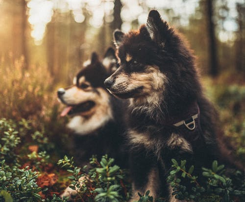 Puppies On A Forest Ground