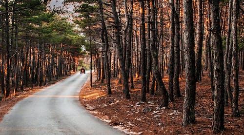 Foto d'estoc gratuïta de bosc, boscos