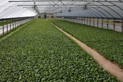 Foto stok gratis agbiopix, agrikultura, bibit, rumah kaca